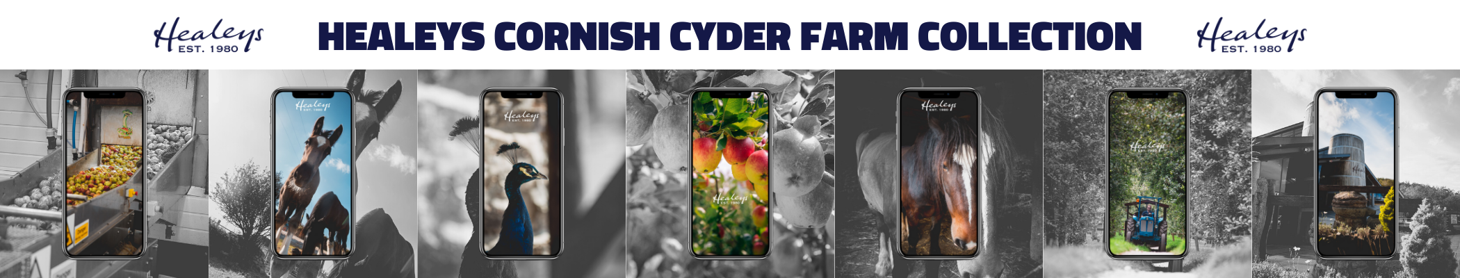Healeys Cornish Cyder Farm Collection
